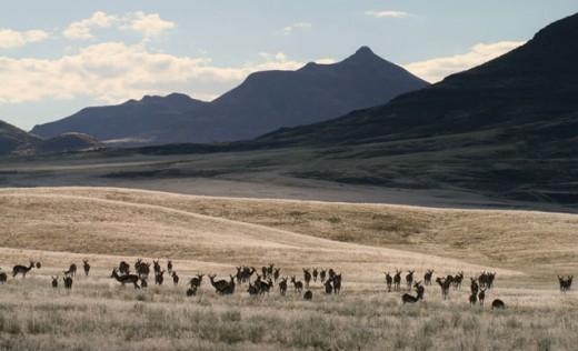 Grazing springbok in Dararaland