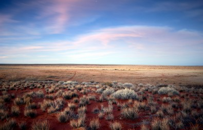 Fairy circles decorate the barren landscape of the Namib Desert